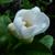 Blossom806